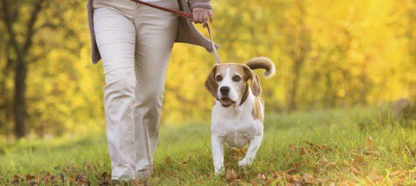 Pastaiga ar patversmes suņiem - Garā pastaiga